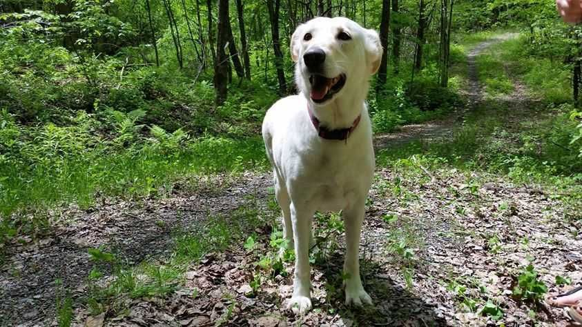 Puppies for adoption in vermont