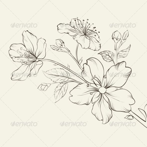 Calligraphy cherry blossom blossoms vector