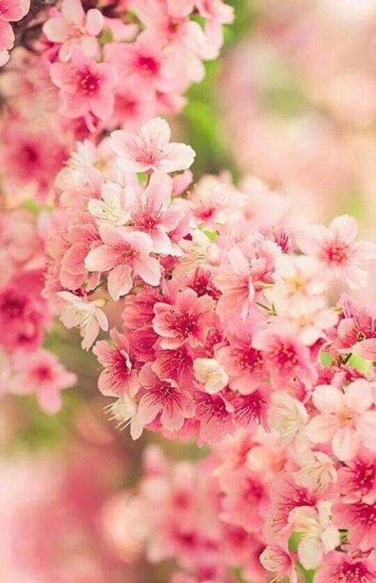 Pin By Bree Hingle On Photography Pinterest Fleurs Fleur Jardin
