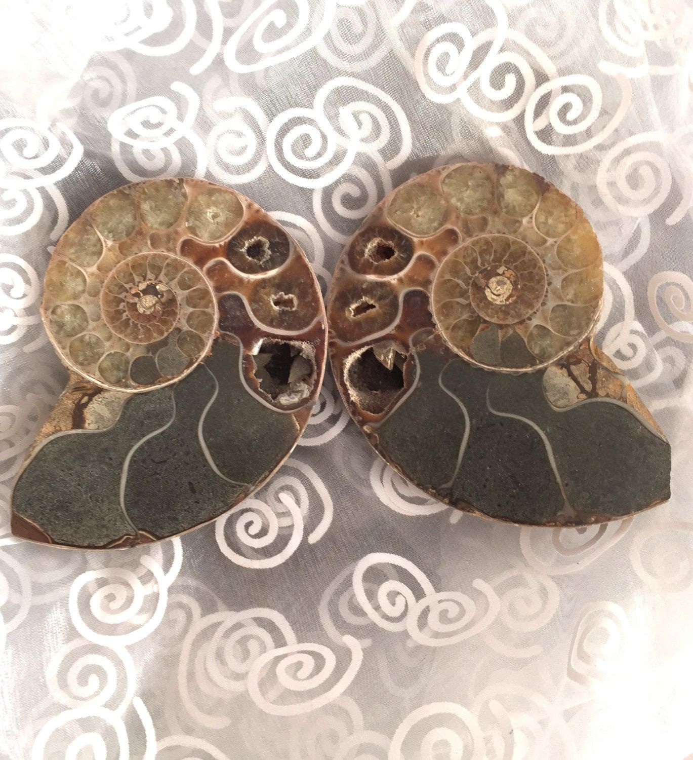 Ammonite! Ammonite Fossil Specimen! Thick Pair of Beautiful Ammonite Slices with Crystals inside! Ammonite for a Positive Flowing Spiral! by shspirithouse on Etsy