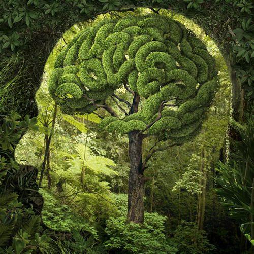 Vihreä ajattelu! Sekä ympäristön, ilmaston ja ihmisen fyysisen ja psyykkisen hyvinvoinnin kannalta