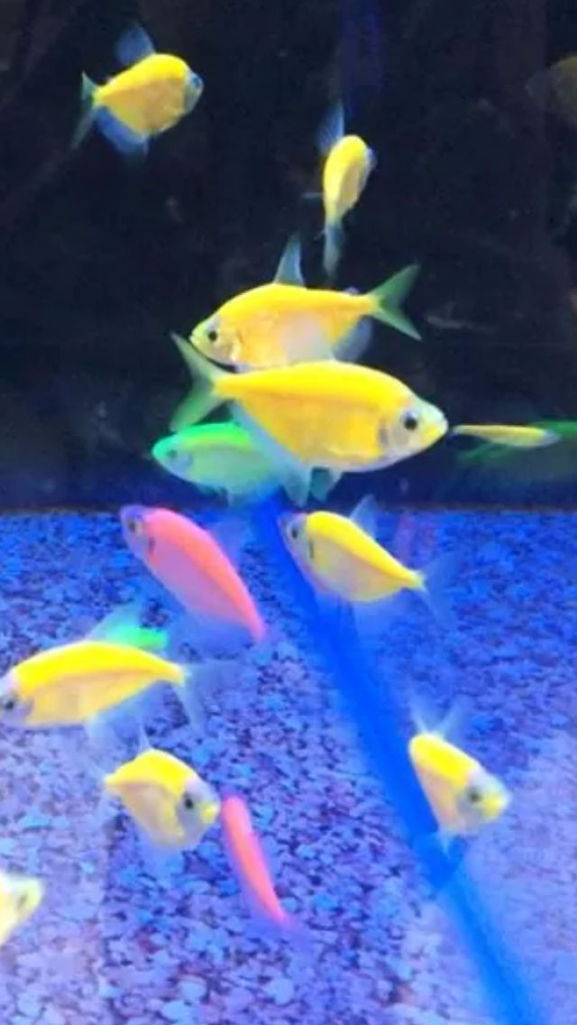 Neon goldfish how cool | Just Because | Pinterest