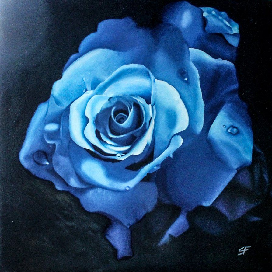 Blue rose by SF-artist on DeviantArt