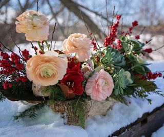 Friends, our preorders are now closed on our fresh Christmas arrangements! Deepest thanks to each of you who took the time to preorder, support our business, and chose LOCALLY grown flowers. You are making a direct difference in the lives of Southern Ontario farmers, and in the lives of my family and small team. When you chose us, you are keeping the lights on (quite literally) in our home and you are keeping the dreams we have for this farm alive. Growing and working with fresh flowers is…