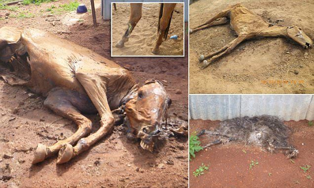 RSPCA fines WA couple after horrific animal cruelty