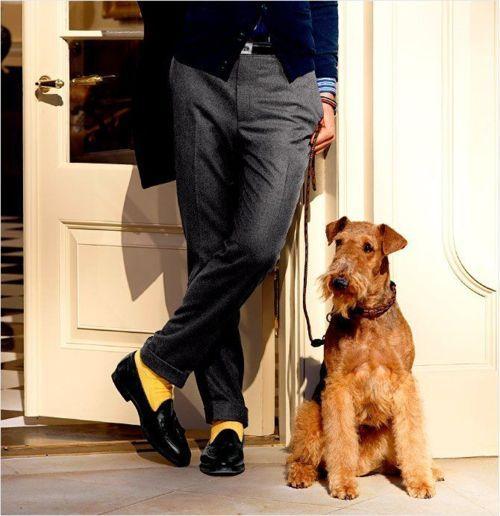 Airedale Terrier Dog Socks Mens