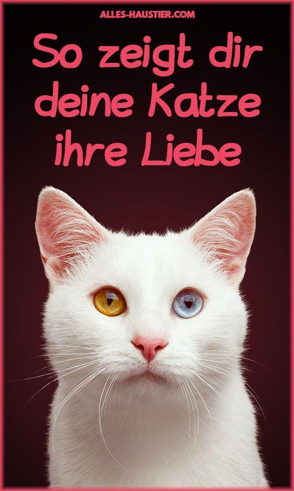 Liebt meine Katze mich? Erfahre auf alles-haustier, wie dir deine Katze ihre Liebe und Zuneigung zeigt. Katzenwissen // Katzenverhalten #katze #liebe #katzen #wissen