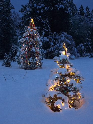 Christmas Tree Lights In The Snow
