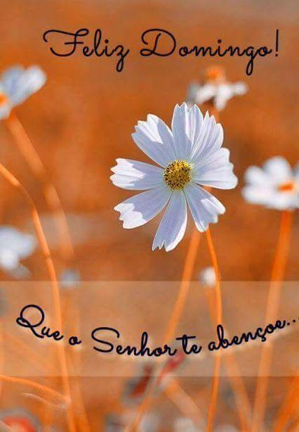Pin De Johanna Em Quotes Bom Dia Com Flores Mensagem De Otimo