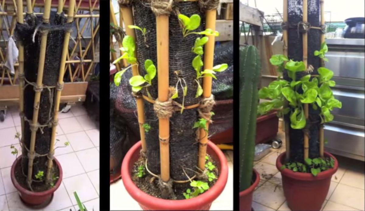 C mo hacer un innovador jard n vertical en casa huertos - Jardin vertical en casa ...