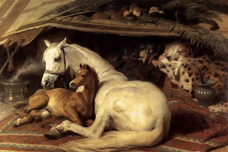 The Arab Tent By Sir Edwin Landseer Horse Painting Horses