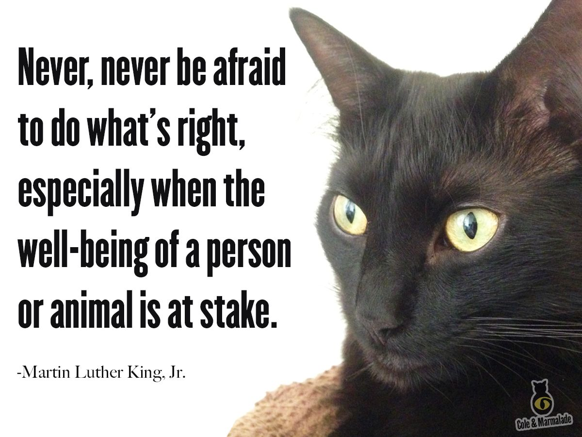Quotes About Cats Mlkday  Quotes About Cats  Pinterest  Cat Life Philosophy And