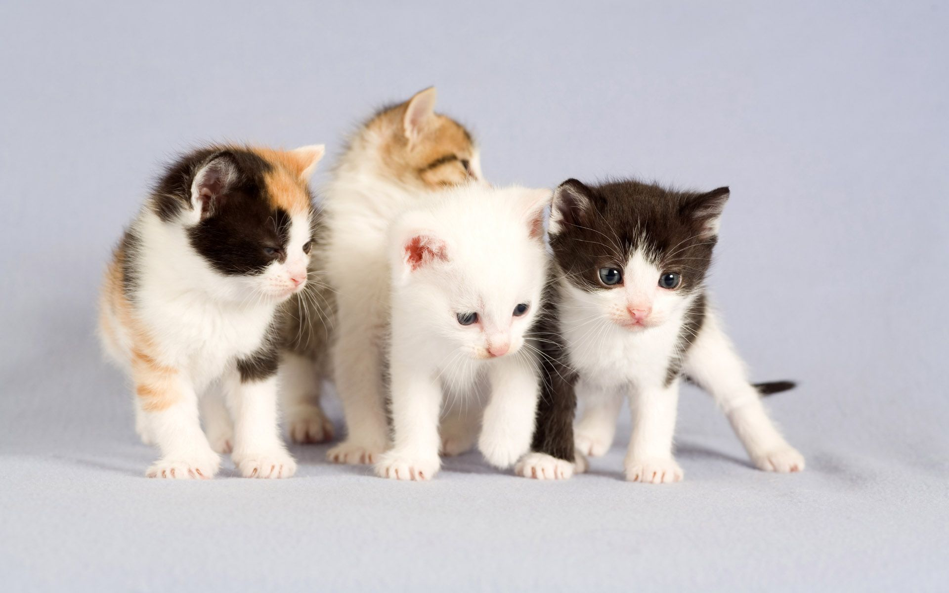 Cute Cats Wallpapers Full Hd Wallpaper Search Page 2 Baby Cats Cute Animals Cute Baby Cats