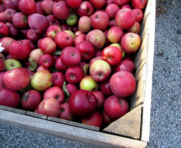 Fall apples are the best.