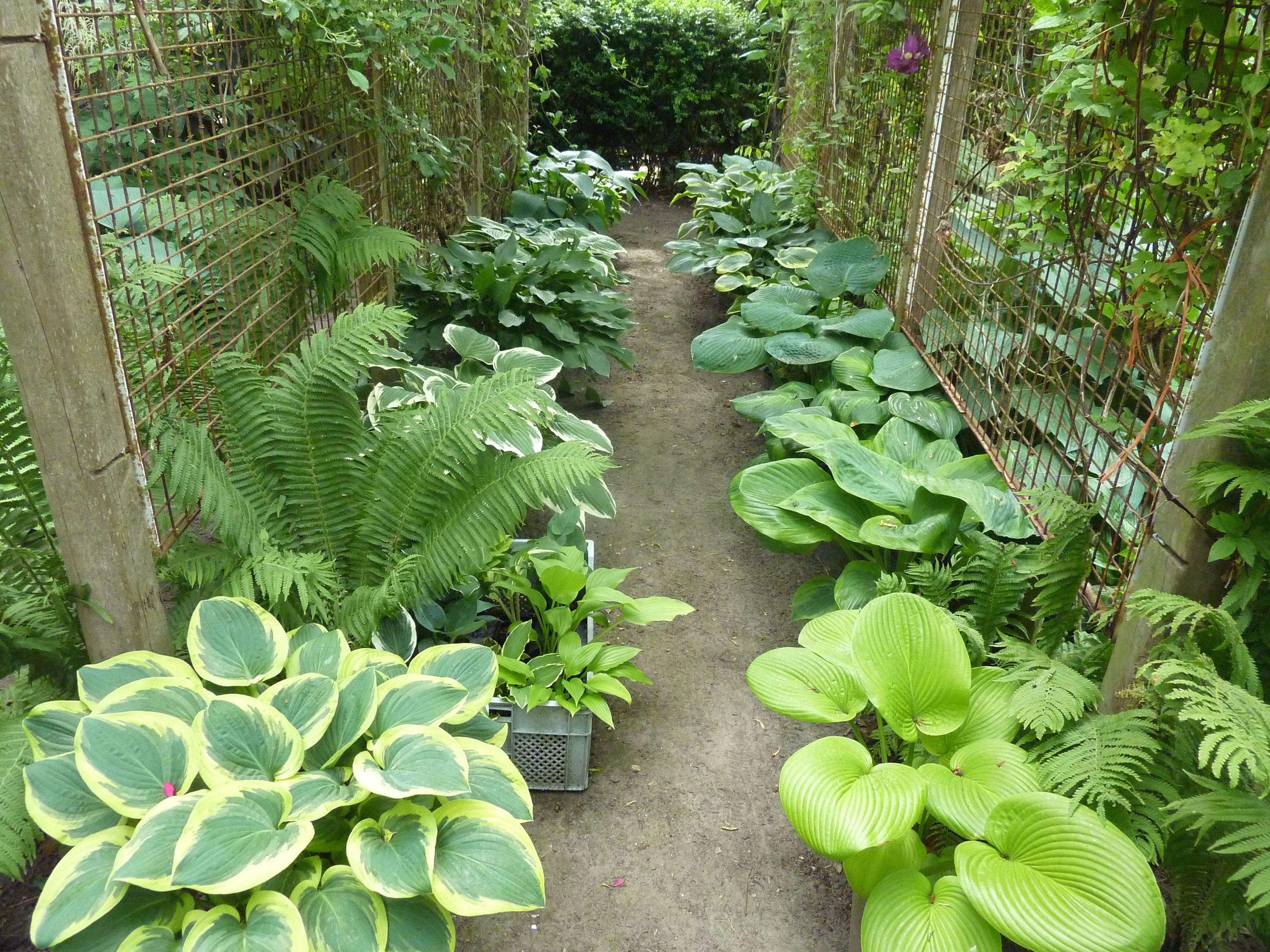 kleines topfgarten mit stil inserat abbild oder eeafadcbde