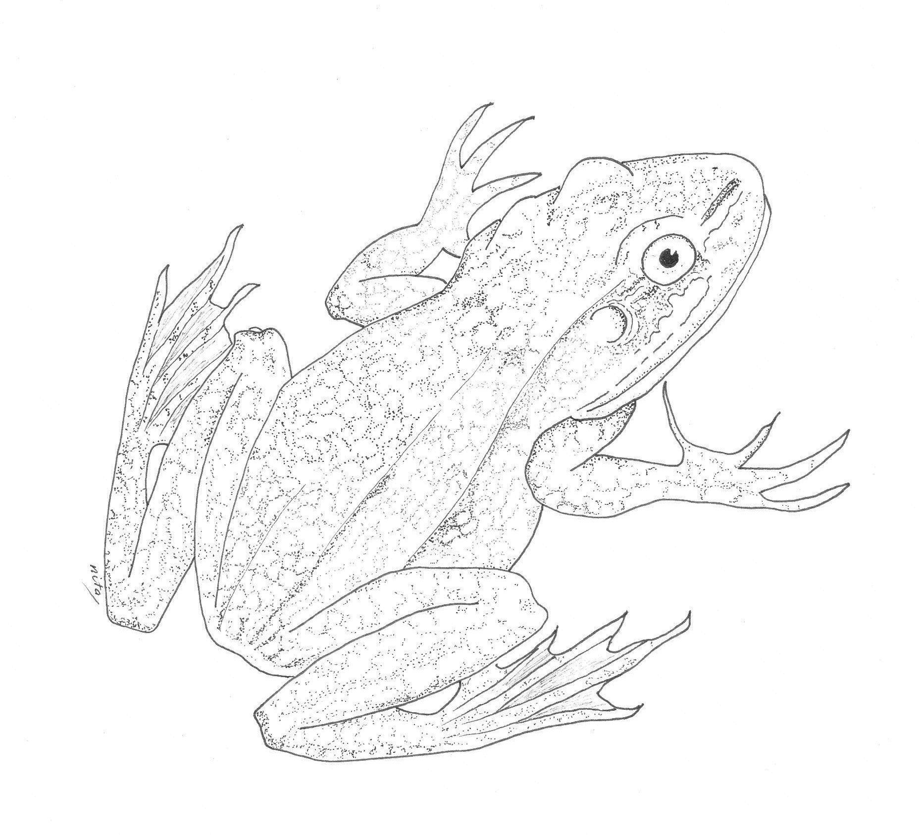 frog-cropped-for-web.jpg (1864×1687) | draw .. a frog | Pinterest