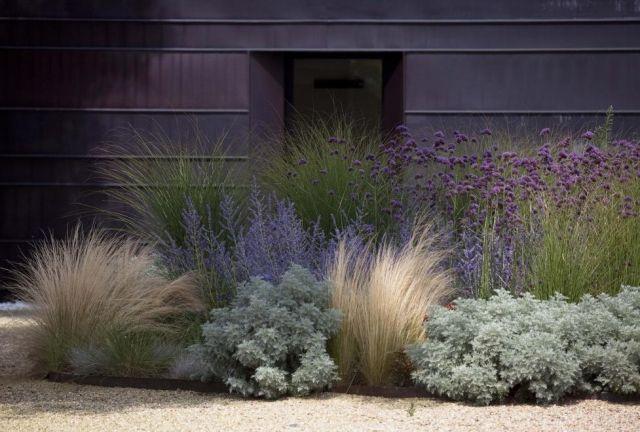 Photo of garden – grasses …
