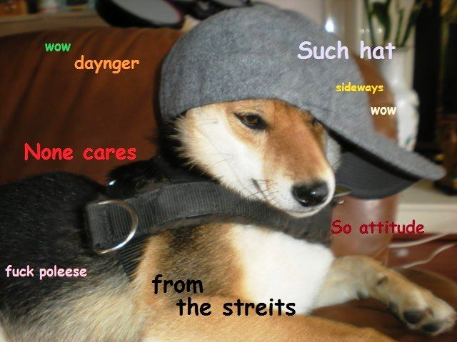 Shibe Meme Hat Jpg 640 480 Memes Doge Funny
