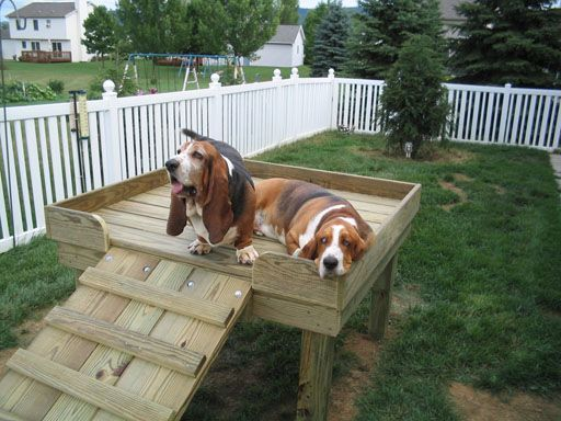 Dog perch for the yard. Perfect for my short legged lady. - Dog Perch For The Yard. Perfect For My Short Legged Lady. Outdoor
