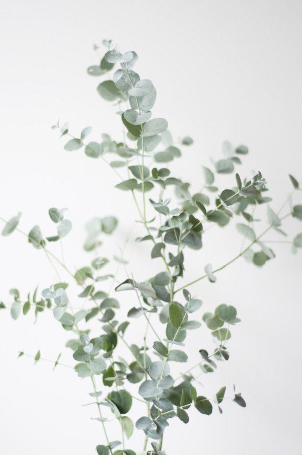 mimiemontmartre fleurs flowers decoration florale. Black Bedroom Furniture Sets. Home Design Ideas