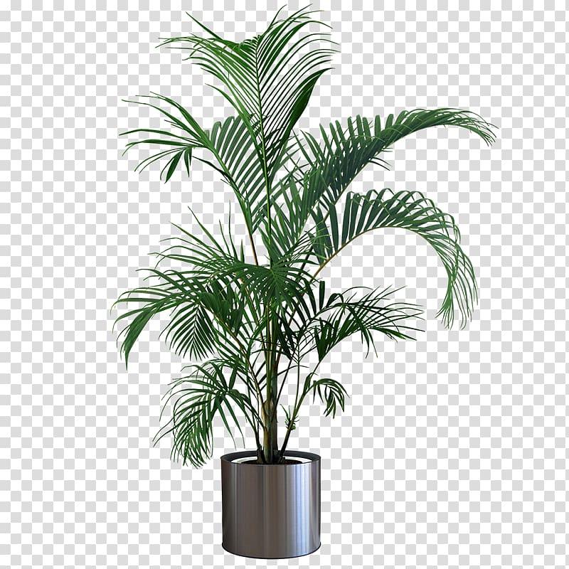 Plant On A Pot Transparent File Google Search Indoor Plant Pots Plants Plant Display Ideas