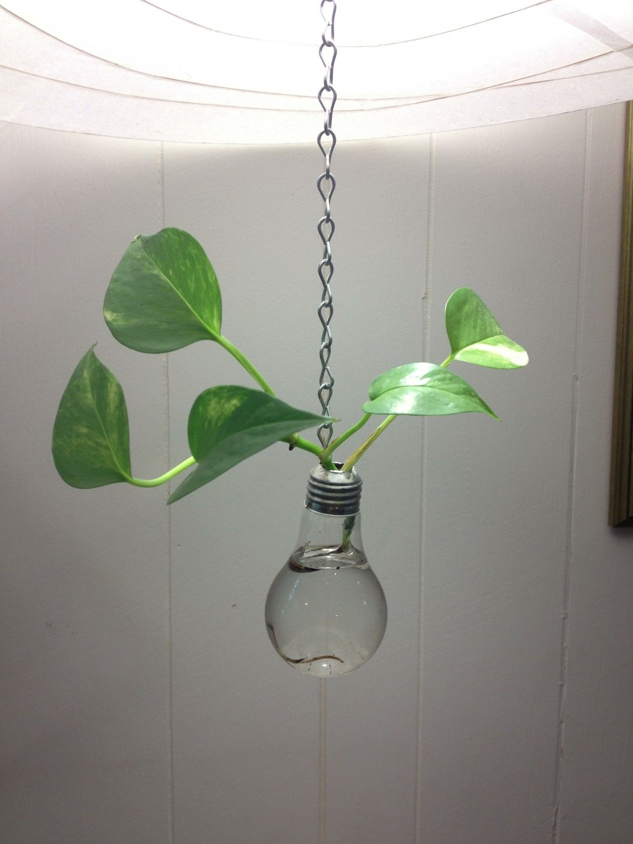 Recycled light bulb hanging vase handmade glass crafts