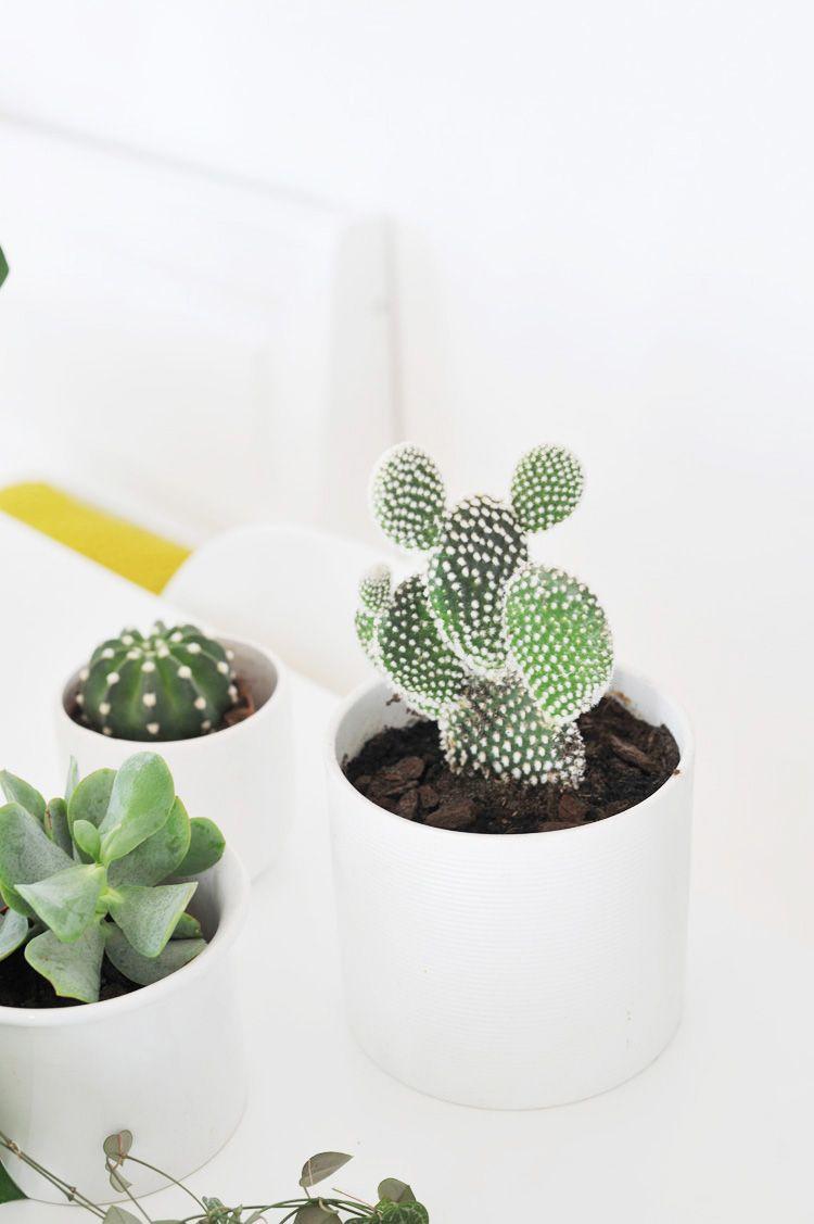 Die besten Zimmerpflanzen für die Wohnung (mit Bildern