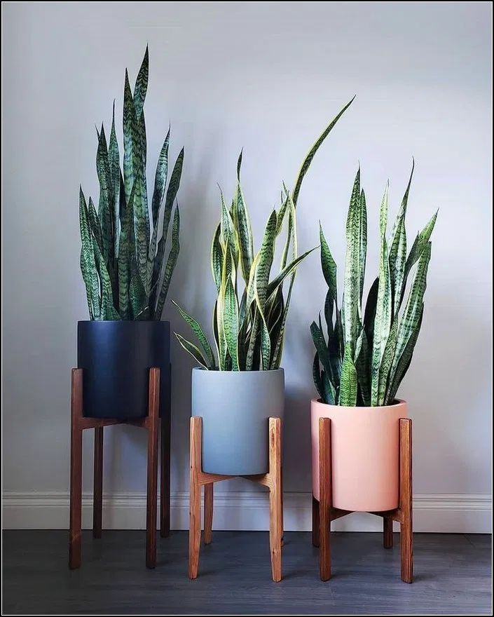 158  Diy Plant Stand Ideas To Fill Your Living Room With