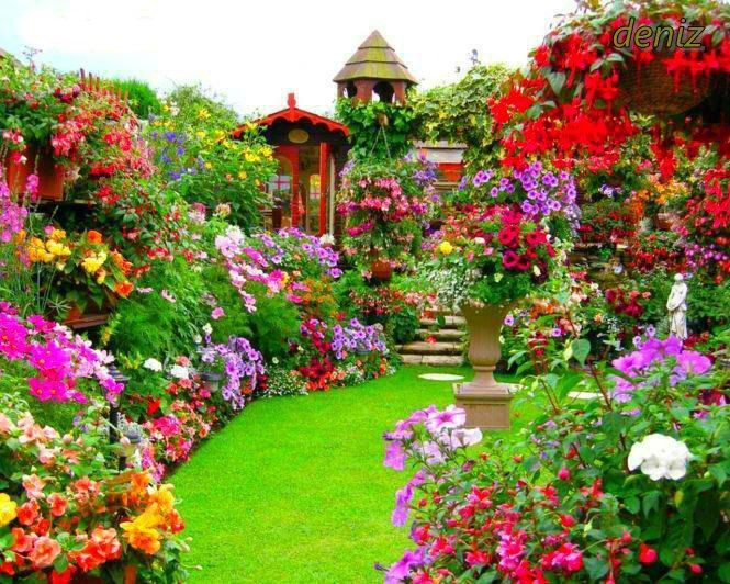 Dreamy Colorful Gorgeous Backyard Garden Flowers Wonderland
