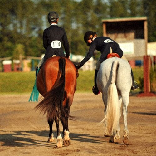 1/ Love your horse. 2/ Talk to your horse: even if you're not sure he understands you, he will understand the tone of your voice. 3/ Always turn a negative into a positive. 4/ Never give up. 5/ Horses need affection, like everyone else. 6/ Always double-check your tack before riding. 7/ Treat your horse with respect and he will do the same for you. 8/ Be gentle with the reins. 9/ Nothing is more important than your horse. 10/ Believe in your dreams.