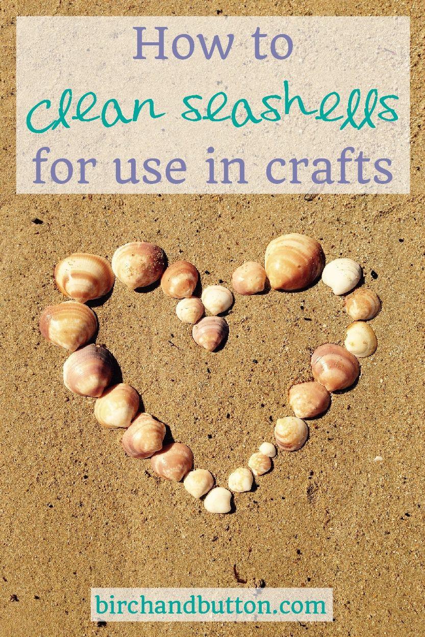 Best 25 How To Clean Seashells Ideas On Pinterest