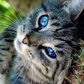 Hey there! I'm Bluepool of Riverclan.  I'm very friendly to all cats, and have alot of patience. Well, you kinda have to when your the clan's medicene cat. Despite me being so, other cats say im a good fighter and healer. And i do not have an apprentice....yet. my sister is Mapleshine, shes really loyal and honest to her clan! She-cat 