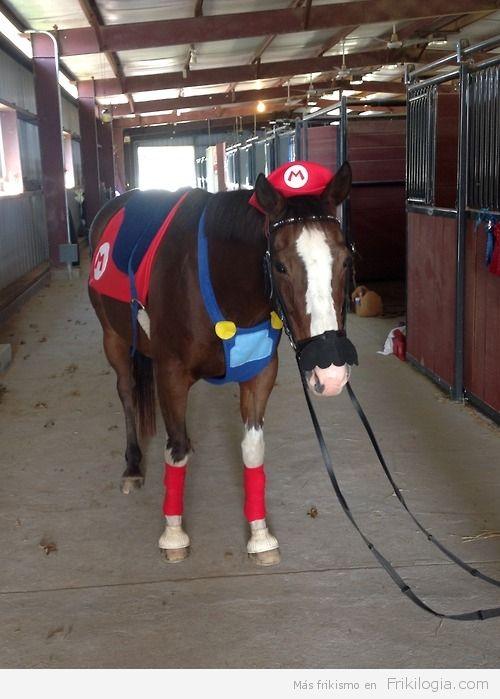 Caballo disfrazado de Mario Bros - http://frikilogia.com/caballo-disfrazado-de-mario-bros/   ¡Its meeeee Caballliioooo!!!