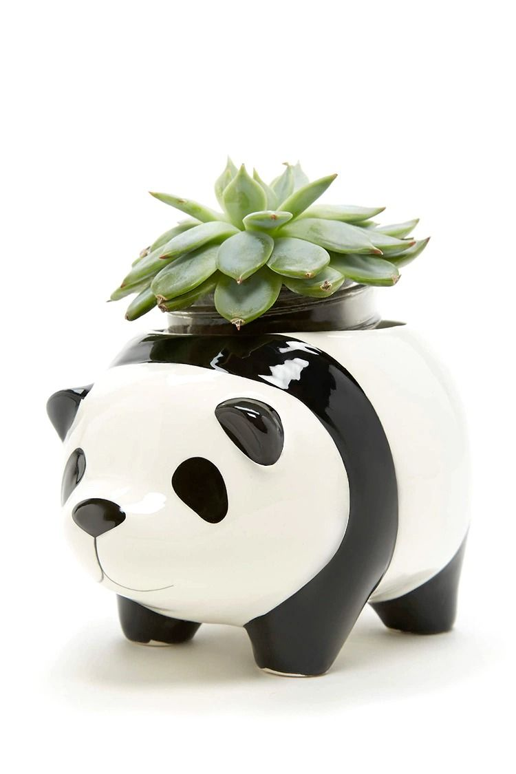 A Ceramic Planter Pot By Streamline Trade Featuring A Panda Design With Protruding Ears Feet Face And Succulent Planter Diy Succulents Diy Succulent Planter