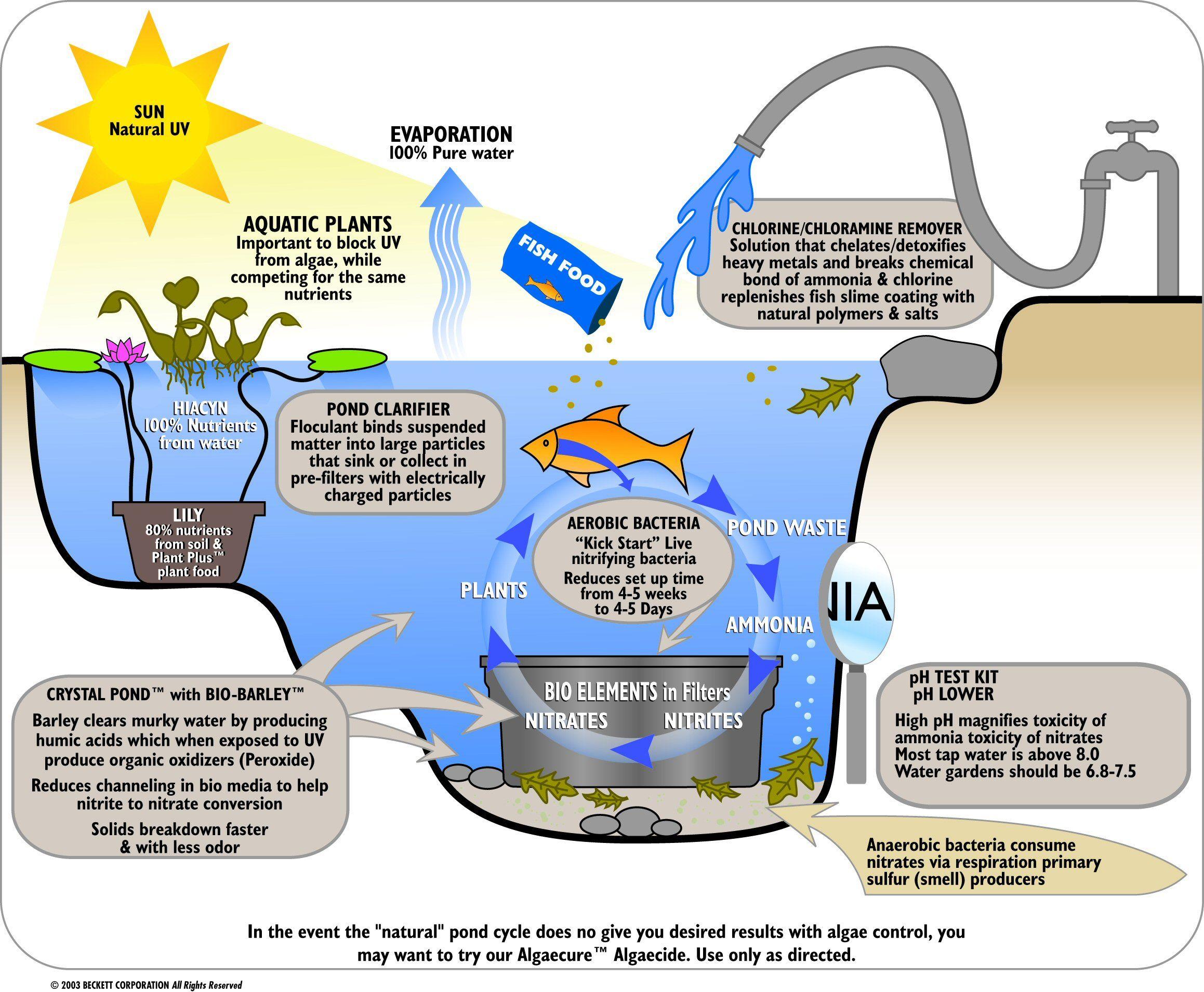 Water filtration diagram for kids google steam for Koi pond plumbing diagram