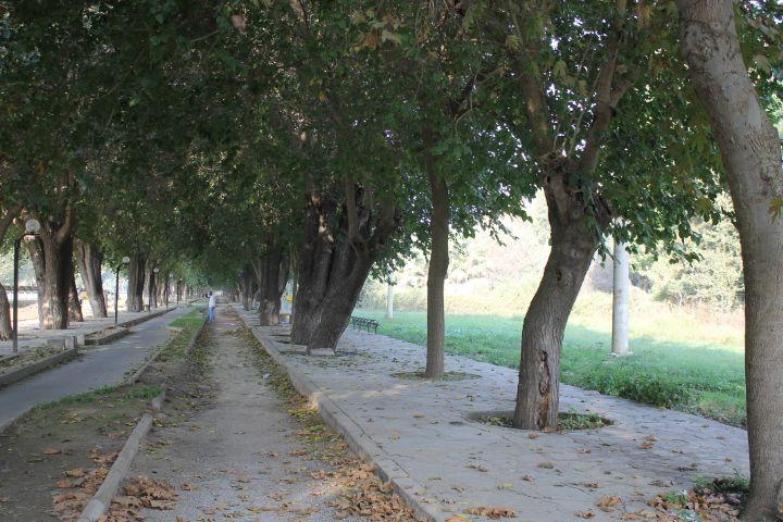 Paseo de Selçuk a Éfeso