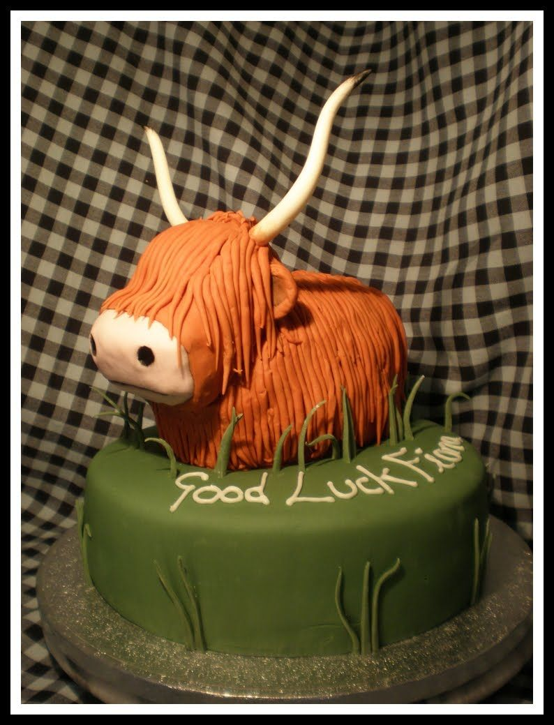 a cute highland cow cake gray u0027s cakes belfast love it www