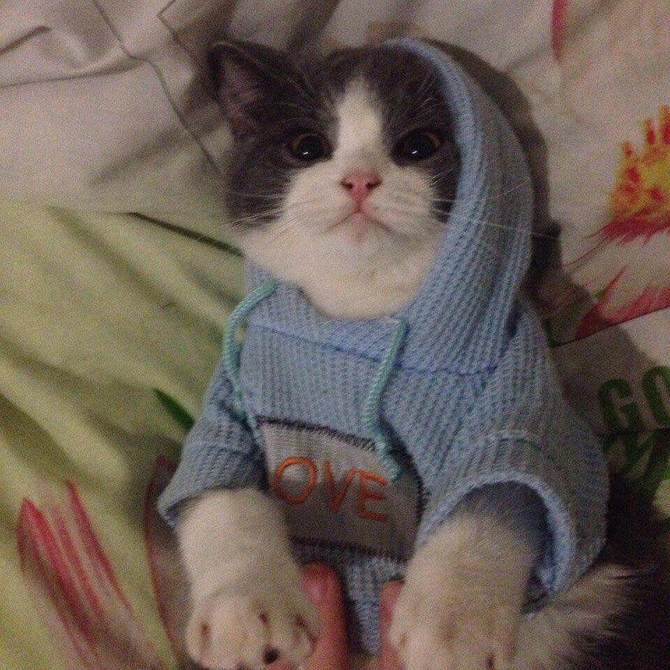 My baby cat cats catsofinstagram instacat instagramanet