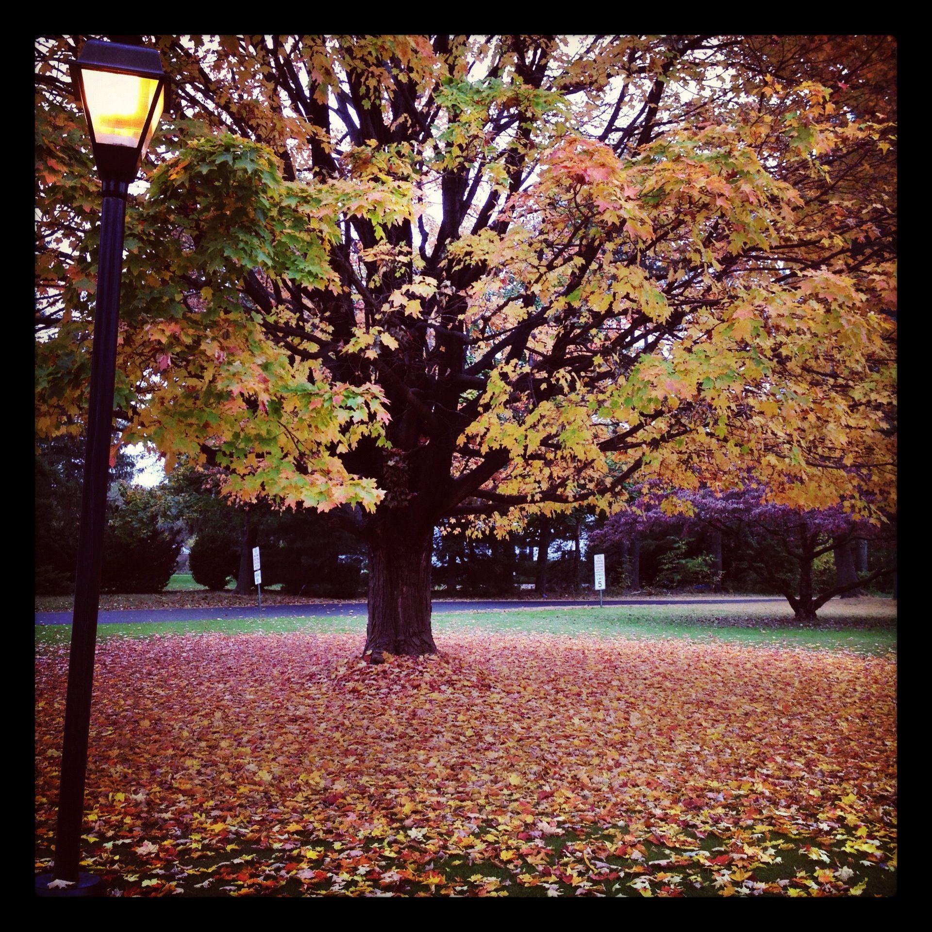 Autumn by amber street light