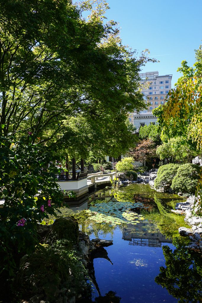 The peace you find inside the Lan Su Chinese Garden in
