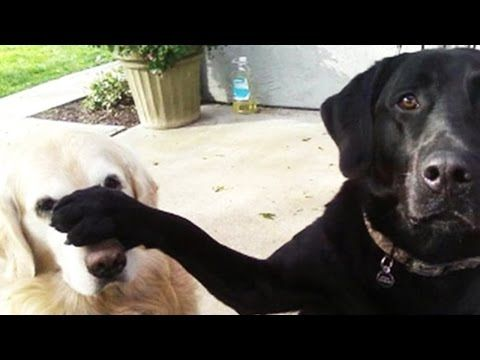 Funny Dog Snitches On Sibling Who Stole The Cookie Www