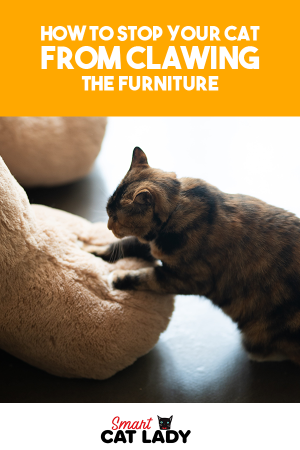 How to Stop Your Cat from Clawing From Furniture | Cats ...