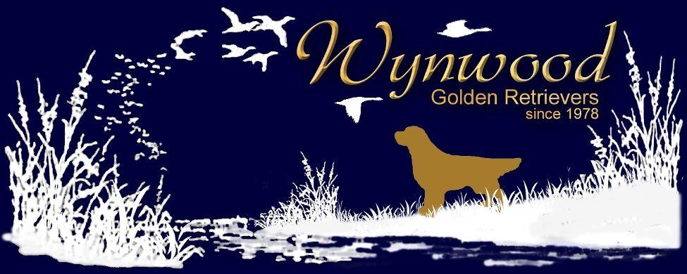 Wynwood Golden Retrievers Golden Puppies Breeders Hastings