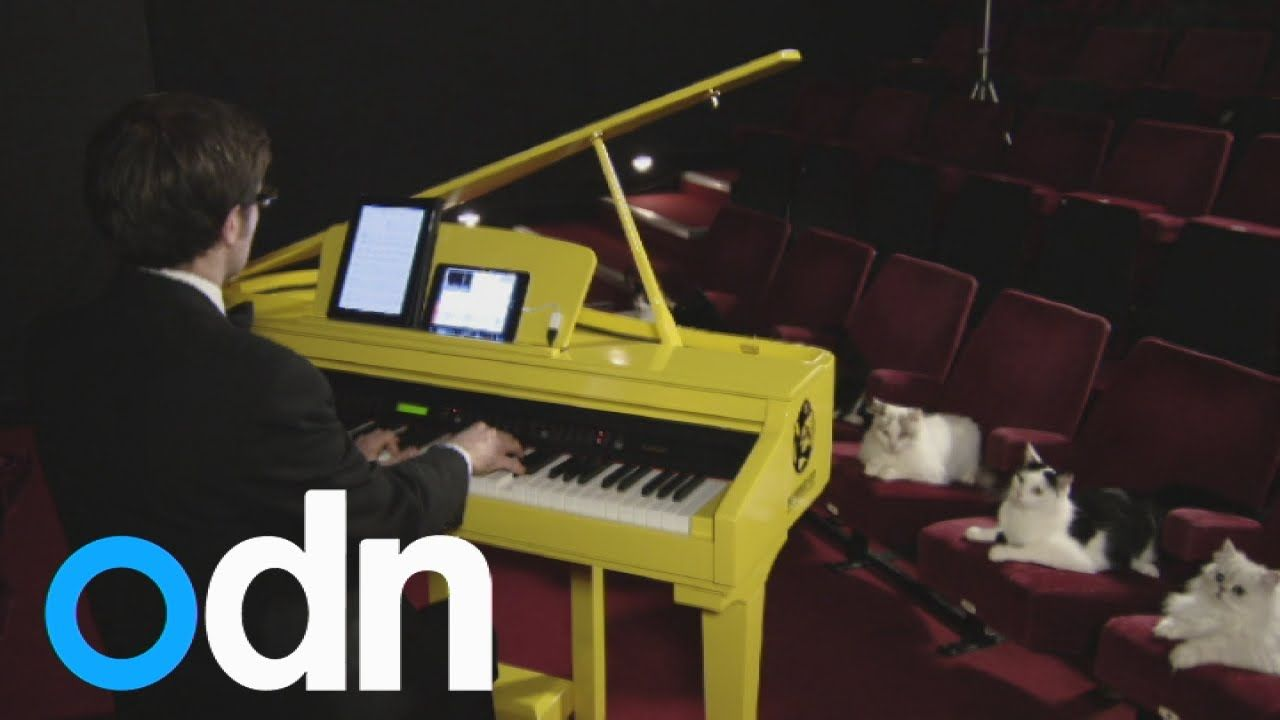 World's first musical keyboard for cats