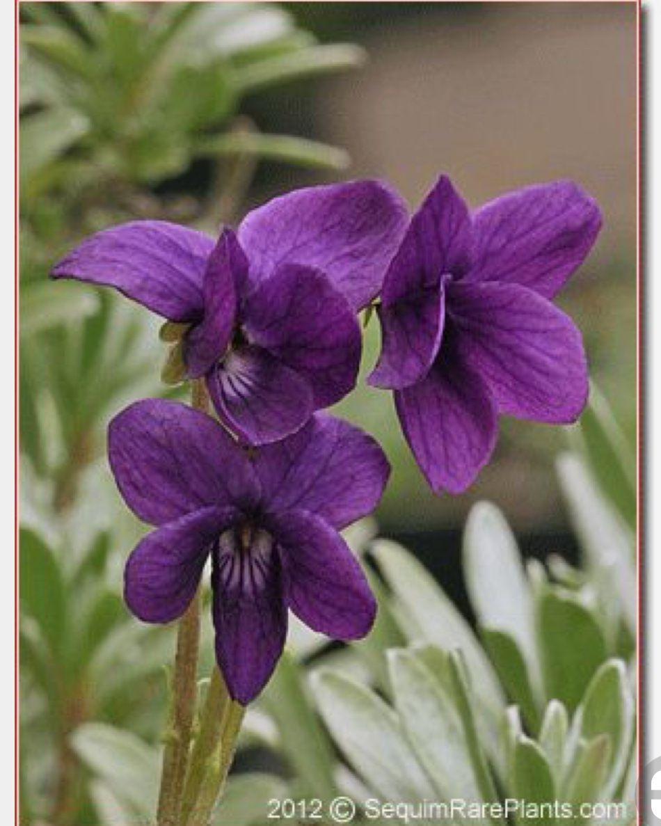 Fein Blume Malseite Fotos - Druckbare Malvorlagen - helmymaher.com