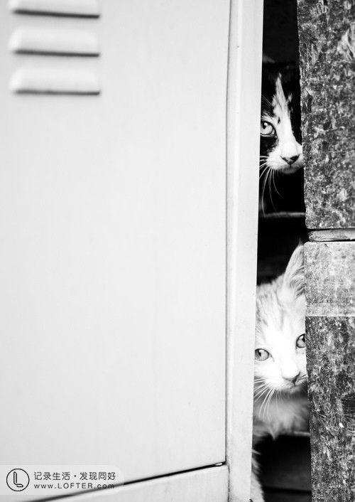 院子里有只母猫生了一窝小猫,一...