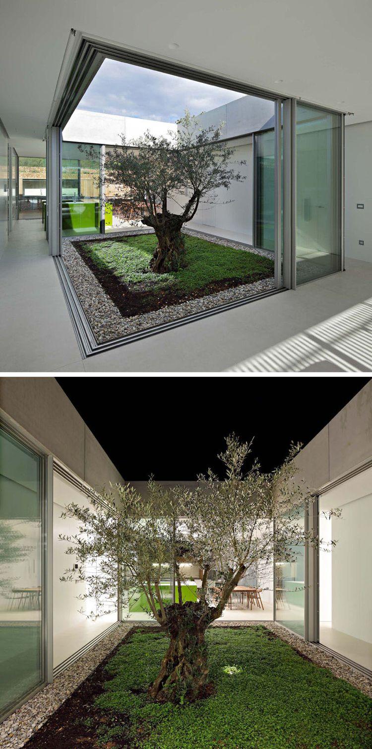 Olivenbaum im Garten mitten im Haus | a Wohnung beach house maritim ...