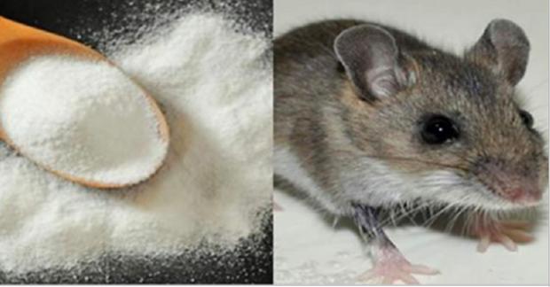 Pon esto en las esquinas de tu casa y los ratones - Como matar ratones ...