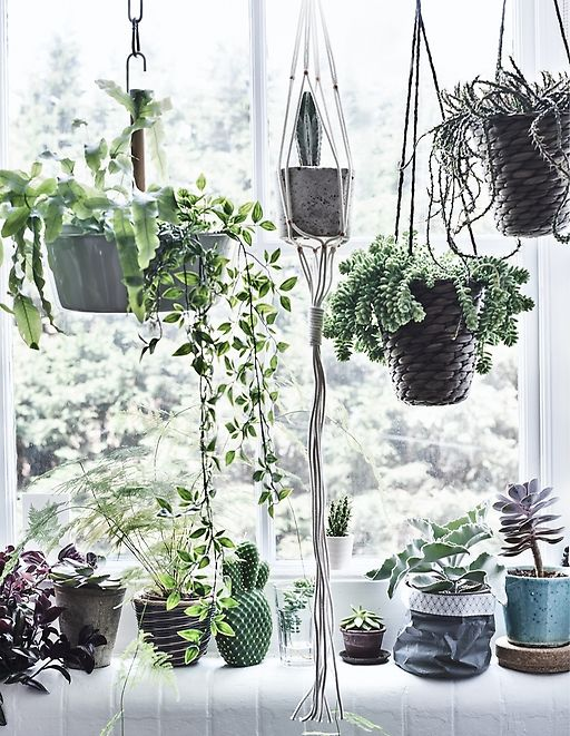 Delicieux Grow A Window Garden   Combine Hanging Planters And Potted Plants To Create  A Window Full Of Nature. Mix All Shapes, Sizes And Colours Of Leaves Anu2026