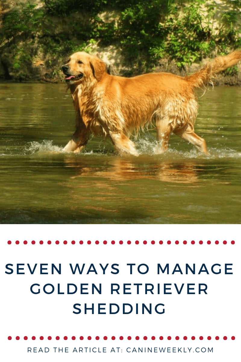 Controlling Your Golden Retriever S Shedding Is Stressful If You Don T Know And Have The Patience To Manage Dog Care Natural Dog Care Golden Retriever Grooming
